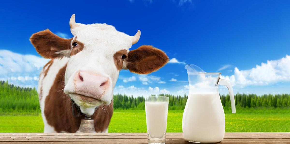 Lactoferrin from Cow's Milk